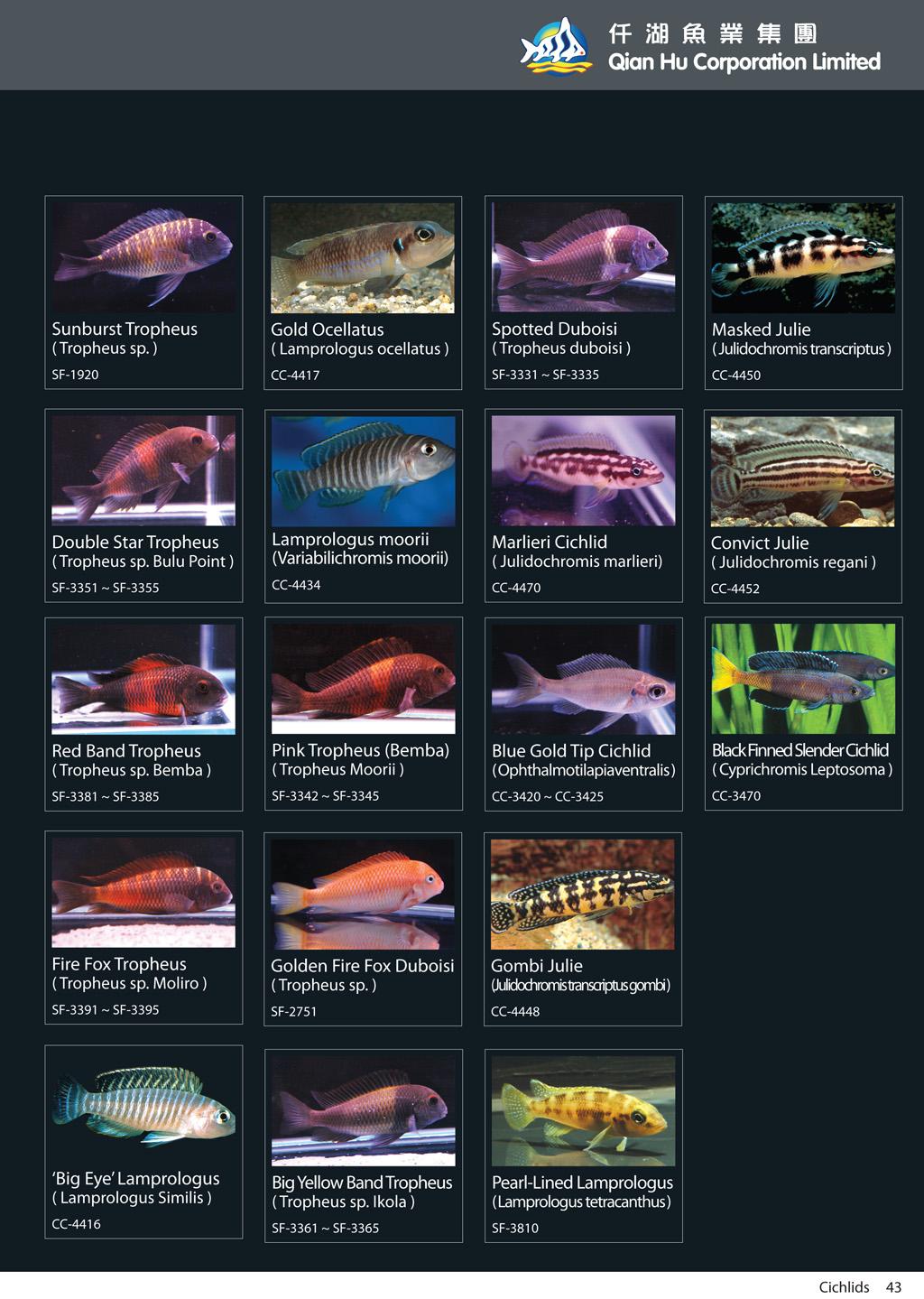 qian hu catalog inside-43.jpg